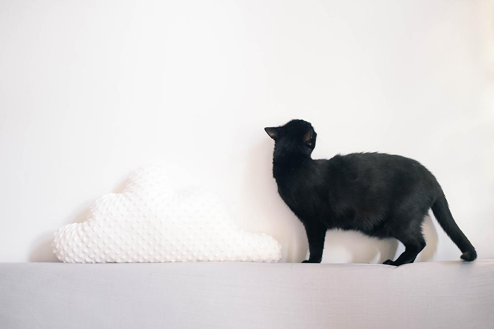 czarny kot poduszka chmurka