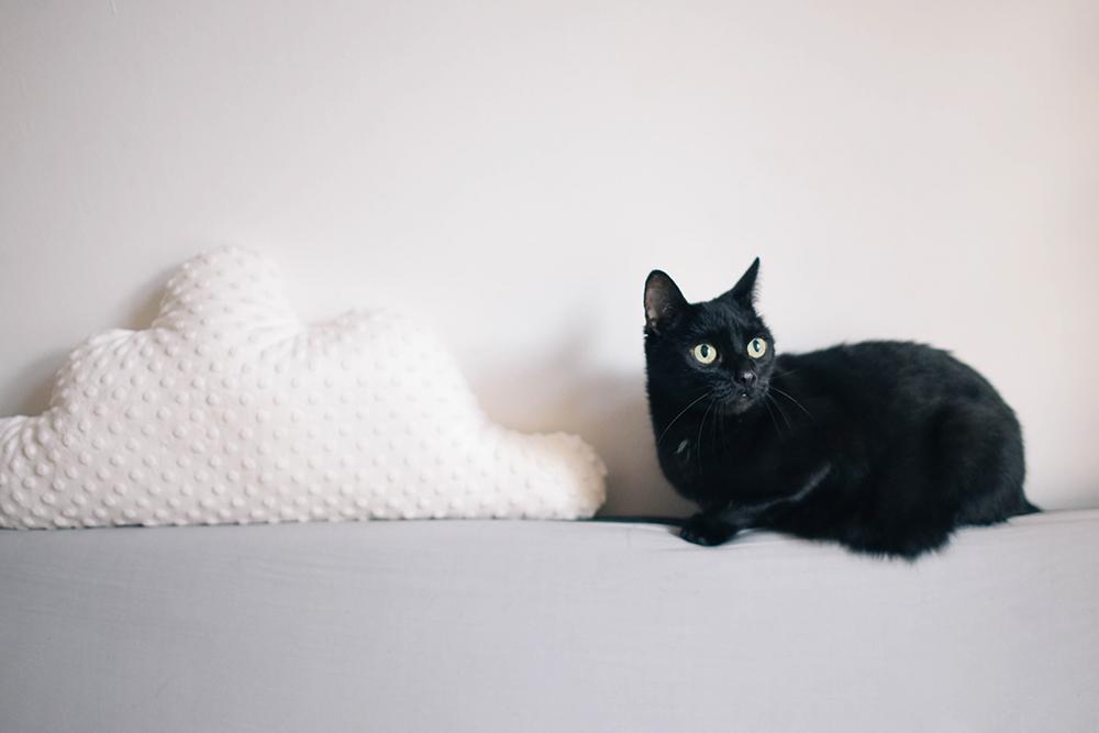 czarny kot wielkie oczy