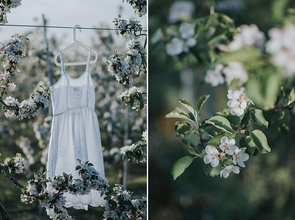 biała sukienka jabłonki sad sesja ślubna