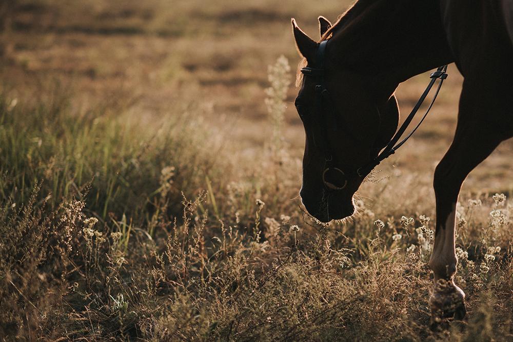 sesja ze zwierzętami koń zachód