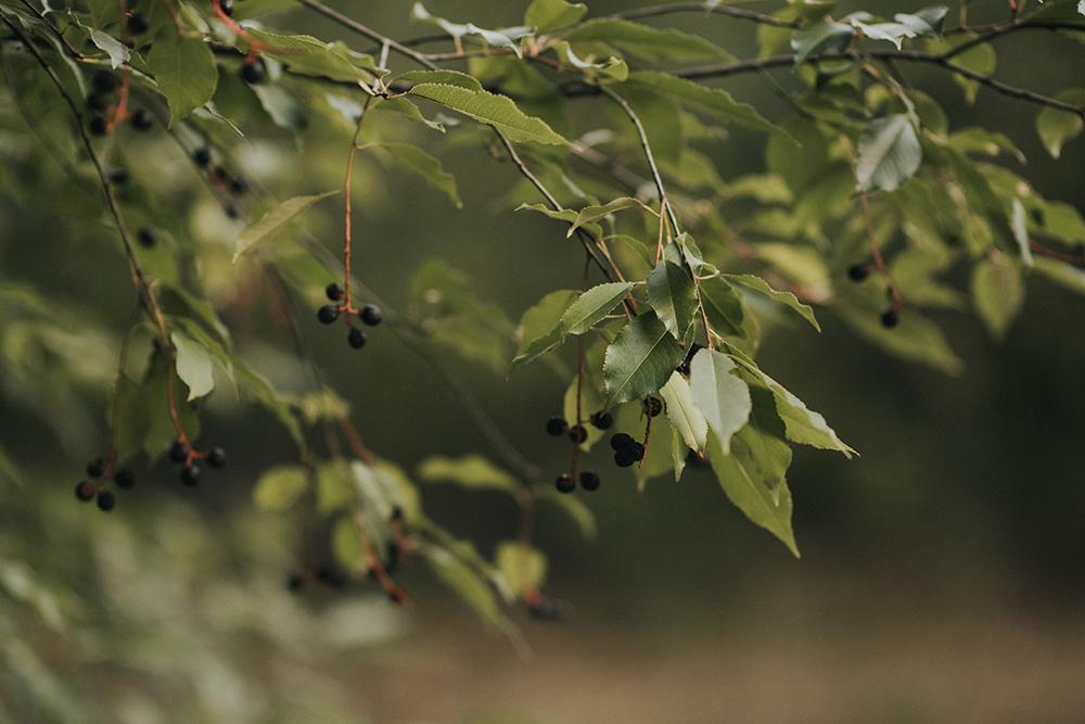 las gałązka